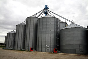 Grains and seeds: manufacturer, retailler and distributor